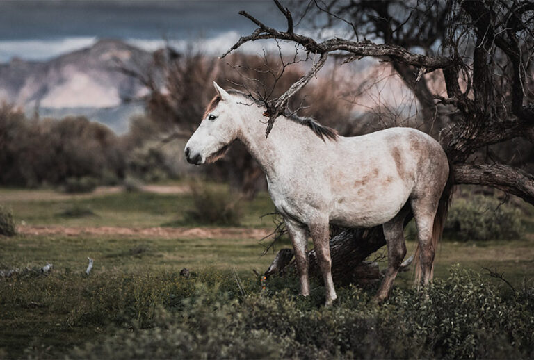 Das Pferdeparadies